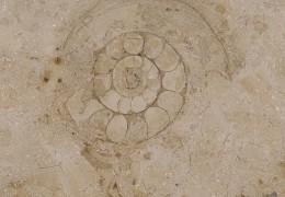 kalksteen en zandsteen
